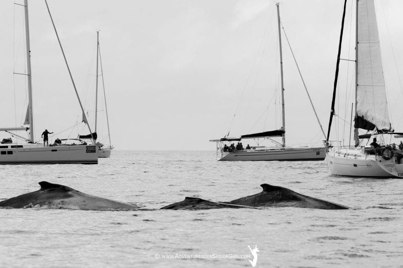 Whales aplenty at Hammo – from the Sailor Girl