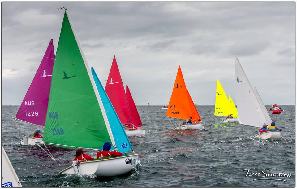 Racing underway at the Hansa regatta held in Geelong. Photo: Tom Smeaton